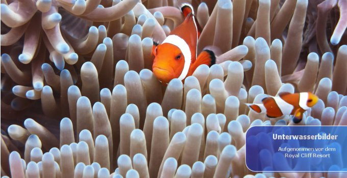 Unterwasserbilder
